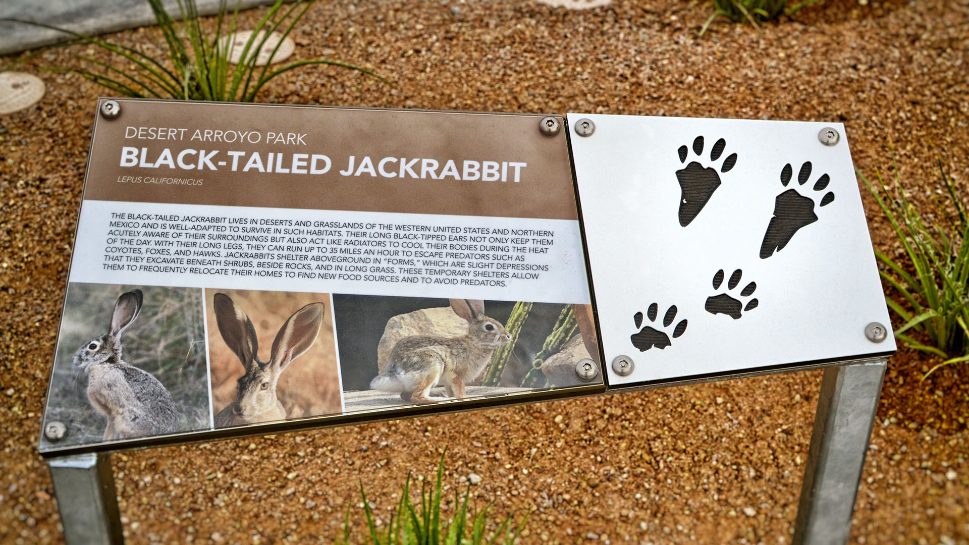 Educational signage about jackrabbits