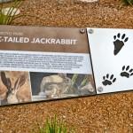 Educational signage about jackrabbits