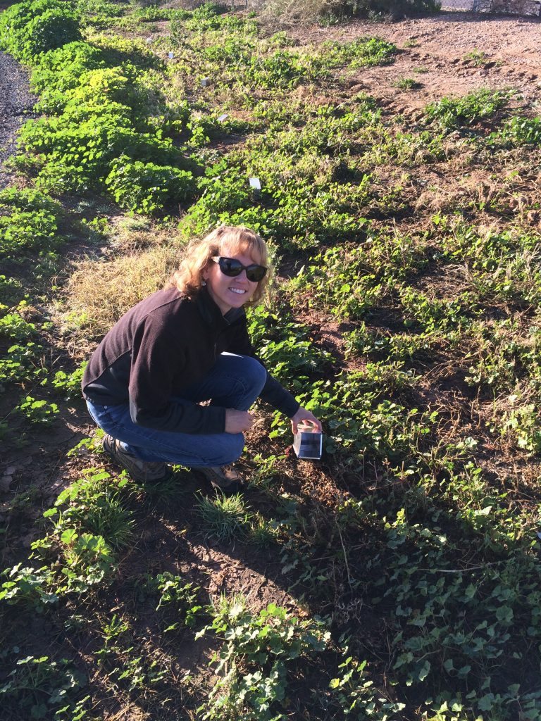 Kay Nicholson checking a Sherman trap while surveying for small mammals at the Chandler Municipal Airport